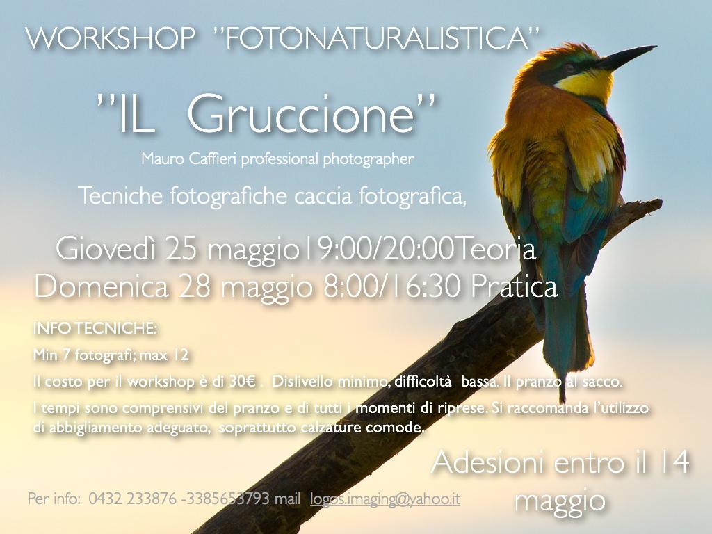 gruccione.006